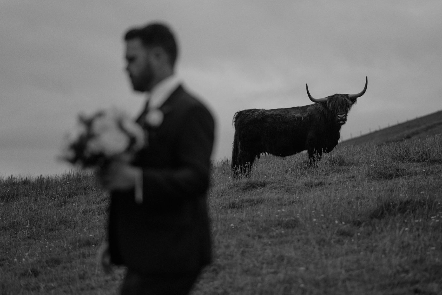 groom and scottish highland cow