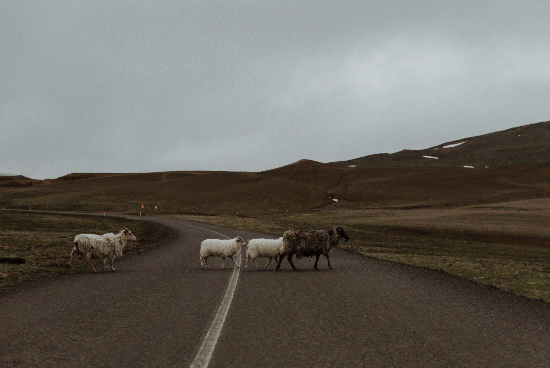 Iceland elopement_0174
