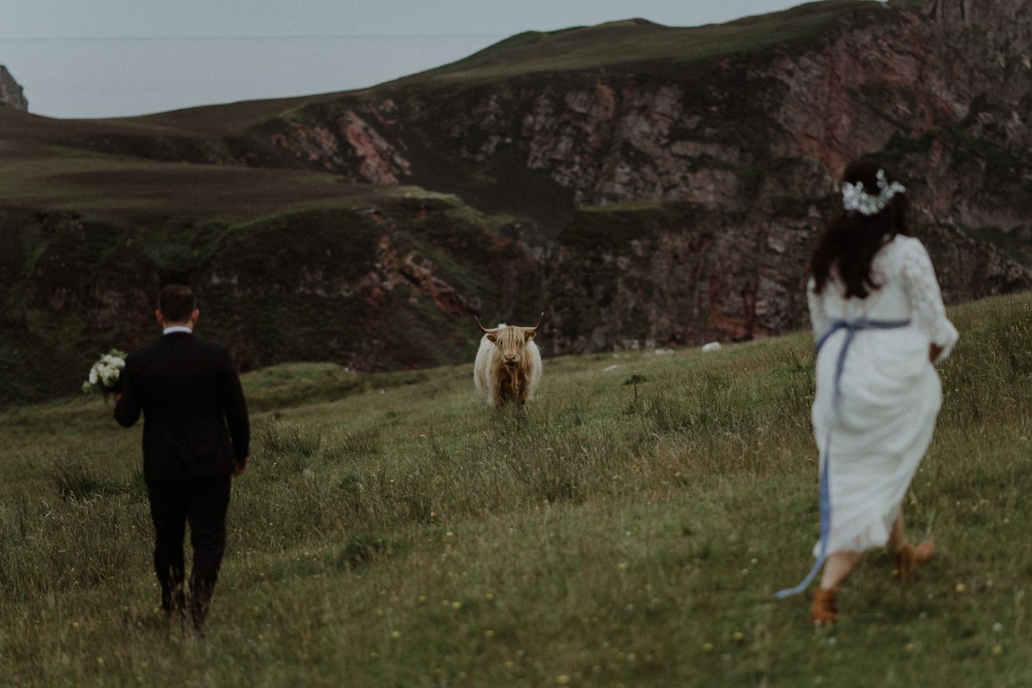 bride and groom and scottish highland cow